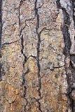 De Textuur van de Schors van de boom Royalty-vrije Stock Afbeeldingen