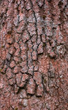 De Textuur van de Schors van de boom Royalty-vrije Stock Afbeelding