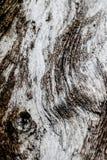 De textuur van de schorsbarst op achtergrond Stock Fotografie