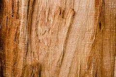De textuur van de schorsbarst op achtergrond Royalty-vrije Stock Fotografie
