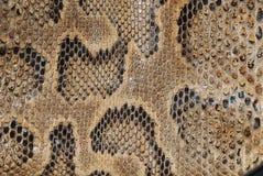 De textuur van de slang Stock Afbeeldingen
