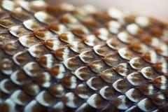 De textuur van de slanghuid Stock Afbeelding