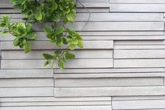 De textuur van de steenmuur en groene bladeren van boom Stock Afbeelding