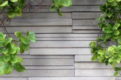 De textuur van de steenmuur en groene bladeren van boom Stock Fotografie