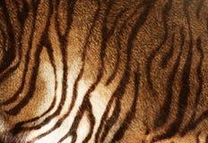 De Textuur van de tijger royalty-vrije stock afbeelding