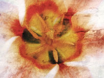De textuur van de tulp Stock Foto's