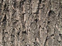 De textuur van de vergankelijke boomschors Royalty-vrije Stock Afbeelding