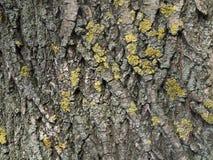 De textuur van de vergankelijke boomschors Stock Afbeelding