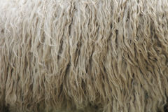 De textuur van de wol Stock Fotografie