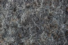 De textuur van gebrande gras en as Royalty-vrije Stock Afbeelding