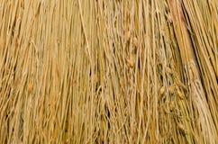 De textuur van het bezemclose-up. stroachtergronden Royalty-vrije Stock Afbeeldingen