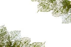De textuur van het blad Royalty-vrije Stock Afbeelding