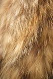 De textuur van het bont stock foto's