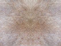 De textuur van het bont Royalty-vrije Stock Foto