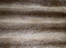 De Textuur van het bont Royalty-vrije Stock Afbeelding