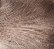 De textuur van het bont Stock Foto