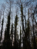 De Textuur van het boomsilhouet Stock Afbeelding