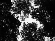De Textuur van het boomsilhouet Royalty-vrije Stock Fotografie