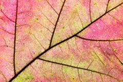 De textuur van het de herfstblad Stock Afbeeldingen