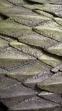 De textuur van het draakleer Stock Foto's