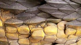 De textuur van het draakleer Royalty-vrije Stock Fotografie
