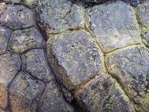 De textuur van het draakleer Stock Foto