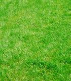 De textuur van het gras Stock Afbeeldingen