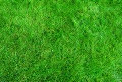 De textuur van het gras Royalty-vrije Stock Afbeeldingen