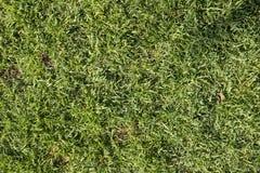 De textuur van het gras Royalty-vrije Stock Afbeelding