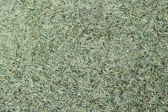 De textuur van het gras Stock Foto's