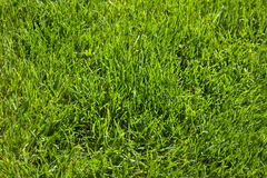 De Textuur van het gras Stock Fotografie