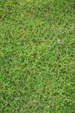 De textuur van het gras Stock Foto