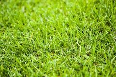 De textuur van het gras Snijd vers groene grasachtergrond Natuurlijk gras In orde gemaakt gazon royalty-vrije stock fotografie
