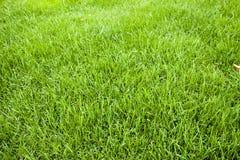 De textuur van het gras Snijd vers groene grasachtergrond Natuurlijk gras In orde gemaakt gazon stock foto