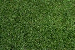 De textuur van het gras (zenit) Stock Fotografie