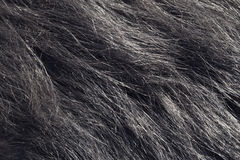 De textuur van het hondhaar stock foto's