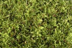 De textuur van het mos royalty-vrije stock foto