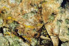 De textuur van het mos op steen royalty-vrije stock afbeelding