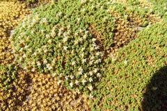 De textuur van het mos op steen stock foto's