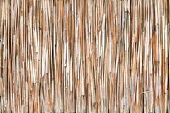 De textuur van het riet Royalty-vrije Stock Fotografie
