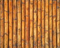 De textuur van het riet Stock Afbeeldingen