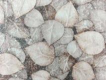 De textuur van het verlof Stock Fotografie