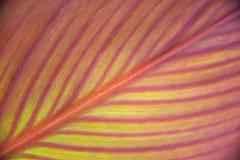De textuur van het verlof Verlofclose-up De achtergrond van het verlof stock foto