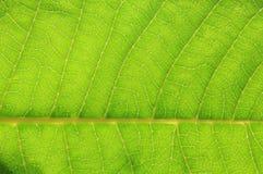 De Textuur van het verlofblad - Abstracte Kunst binnen Aard - Groene Achtergrond Royalty-vrije Stock Afbeelding