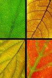 De textuur van het vier kleurenblad Stock Foto