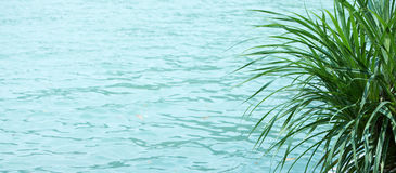De textuur van het water stock foto
