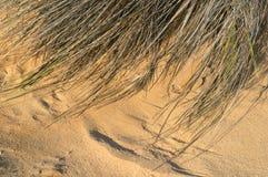 De textuur van het zand en van het gras Royalty-vrije Stock Foto's