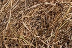 De textuur van hooi en droog gras Royalty-vrije Stock Foto