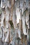 De textuur van hout voor achtergrond Stock Afbeelding