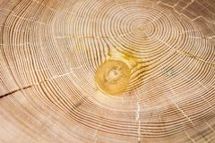 De textuur van de lariks stock afbeeldingen